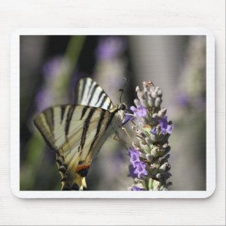 Scarce Swallowtail (Iphiclides podalirius) Mouse Pad