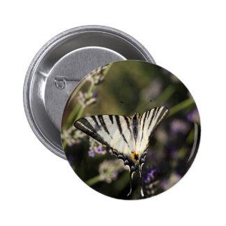 Scarce Swallowtail (Iphiclides podalirius) Pinback Button
