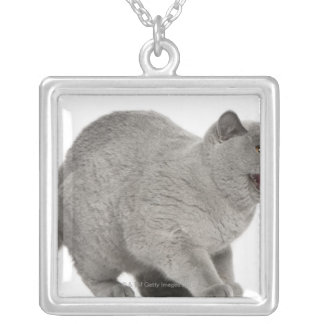 Scared British Shorthair hissing (8 months old) Silver Plated Necklace