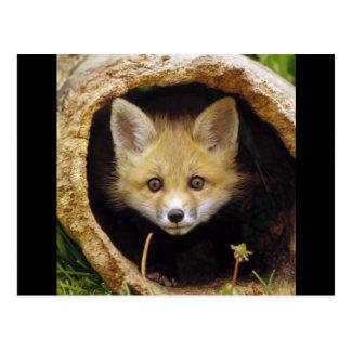 Scared Little Fox Postcard