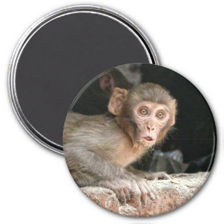 Scared monkey with big eyes 3 inch round magnet