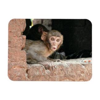 Scared monkey with big eyes rectangular magnet