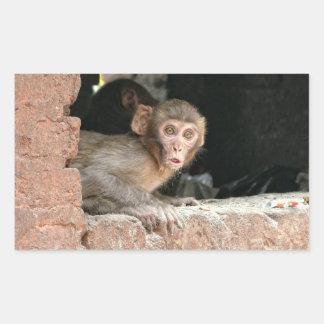 Scared monkey with big eyes rectangular sticker