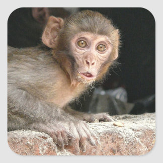 Scared monkey with big eyes square sticker