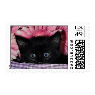Scaredy Kitten Stamp