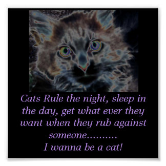 scarey cat, Cats Rule the night, sleep in the d... Poster