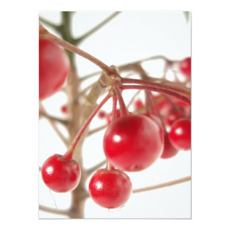 Scarlet Berries 5.5x7.5 Paper Invitation Card