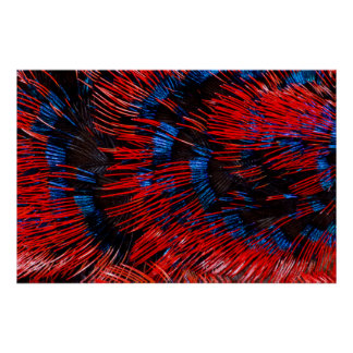 Scarlet-Chested Sunbird Feathers Poster