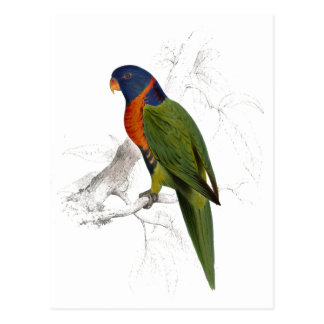 Scarlet-Collared Parrakeet by Edward Lear Postcard