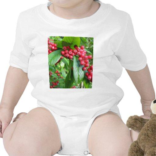 Scarlet Firethorn Shirts
