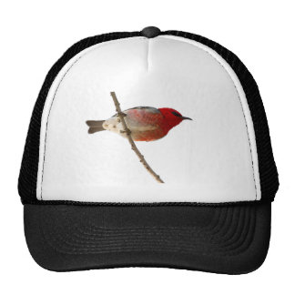 Scarlet Honeyeater Trucker Hat