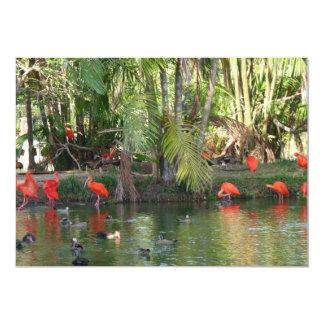 Scarlet ibis card
