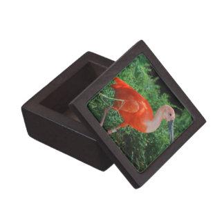 Scarlet Ibis Premium Gift Box