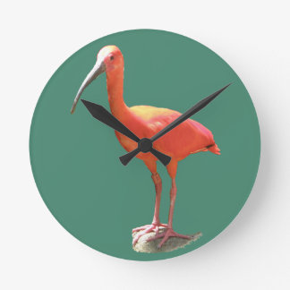 Scarlet Ibis Round Wall Clock