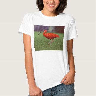 Scarlet ibis shirt