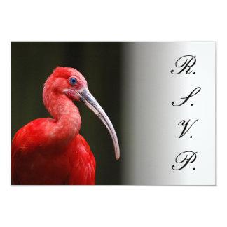 Scarlet Ibis Wedding Card