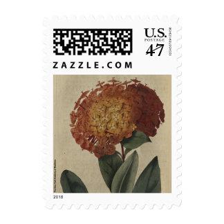 Scarlet Ixora Postage