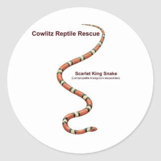 Scarlet King Snake Classic Round Sticker