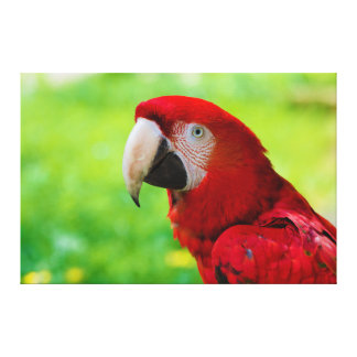 Scarlet Macaw Ara Macao American Parrot Canvas Print