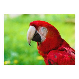 Scarlet Macaw Ara Macao American Parrot Card