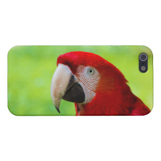 Scarlet Macaw Ara Macao American Parrot Covers For iPhone 5