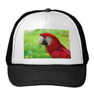 Scarlet Macaw Ara Macao American Parrot Trucker Hat