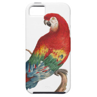 Scarlet Macaw Ara macao iPhone 5 Cover