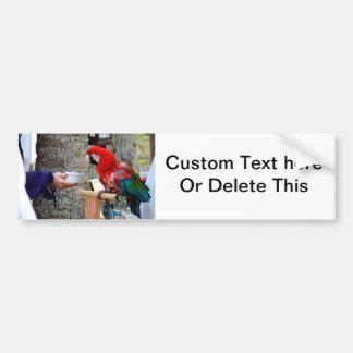 scarlet macaw baby offered dish car bumper sticker