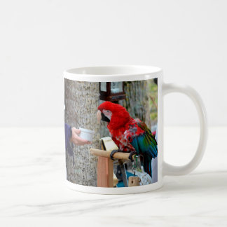 scarlet macaw baby offered dish coffee mug