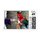 scarlet macaw baby offered dish postage