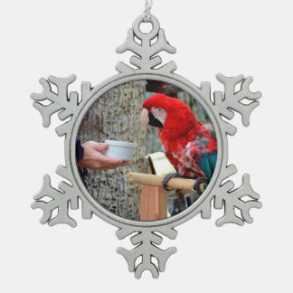 scarlet macaw baby offered dish snowflake pewter christmas ornament
