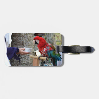 scarlet macaw baby offered dish tag for luggage