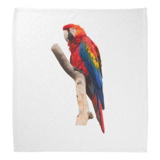 Scarlet Macaw Bandana