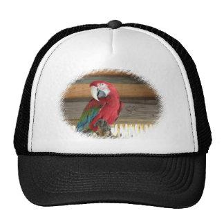 Scarlet Macaw Baseball Cap Trucker Hat