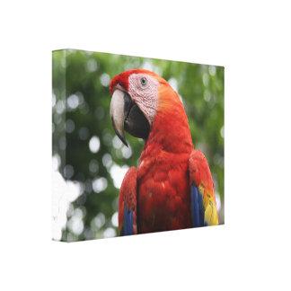 scarlet macaw bird canvas