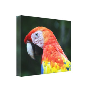 scarlet macaw canvas