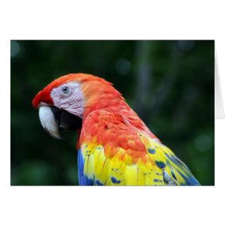 scarlet macaw card