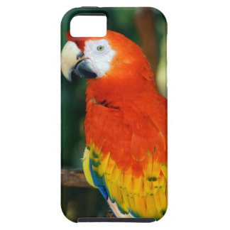 Scarlet Macaw iPhone 5/5S Cases