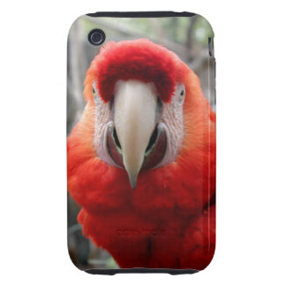 Scarlet Macaw Tough iPhone 3 Cases