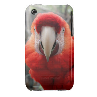 Scarlet Macaw iPhone 3 Cover