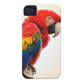 Scarlet Macaw iPhone 4 Case