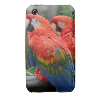 Scarlet Macaw Case-Mate iPhone 3 Cases