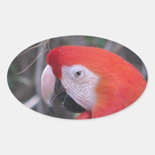 Scarlet Macaw - Close Up Oval Sticker