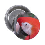 Scarlet Macaw - Close Up Pin
