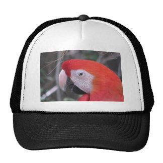 Scarlet Macaw - Close Up Trucker Hat