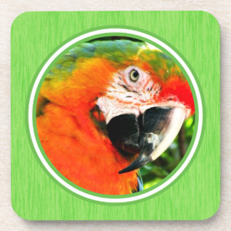 Scarlet Macaw Coasters Set - Green