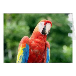 scarlet macaw copán card