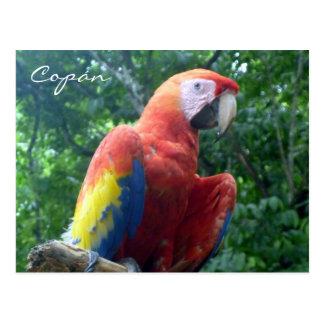 scarlet macaw copán postcard