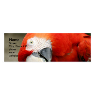 Scarlet Macaw Double-Sided Mini Business Cards (Pack Of 20)