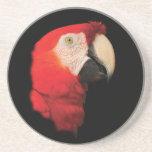 scarlet macaw drink coasters